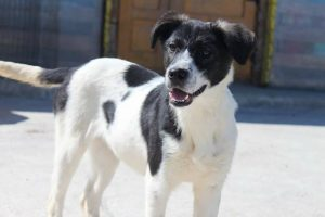 Milka (adopted)
