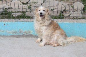 Joko (adopted)