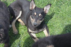 Tasha (adopted)