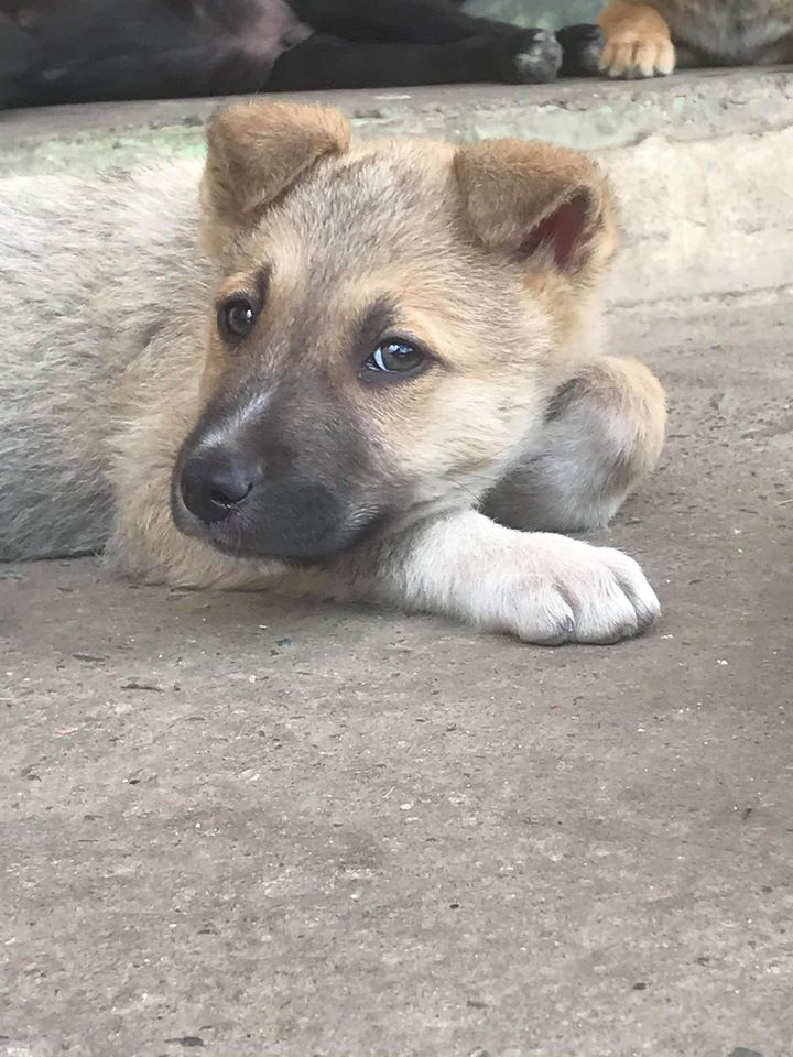 Timon is a 2 months old boy, very cuddly and loving