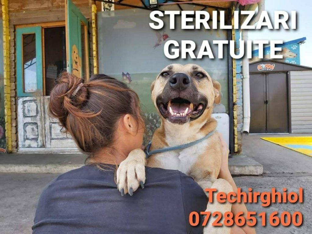 STERILIZARI GRATUITE
